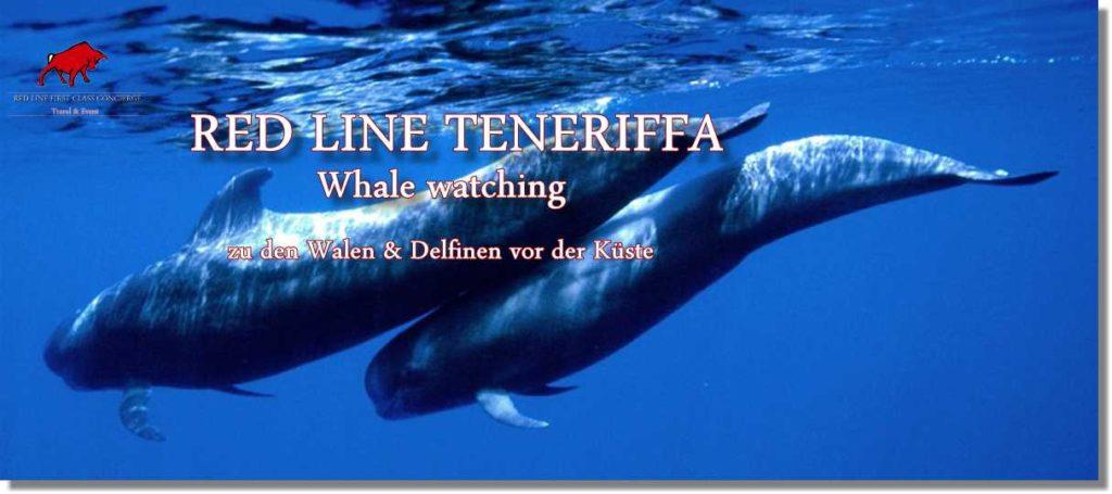 Whale Watching Teneriffa. Wal Beobachtung Teneriffa.