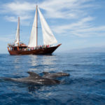 Whale Watching Teneriffa. Teneriffa-Exquisit.com