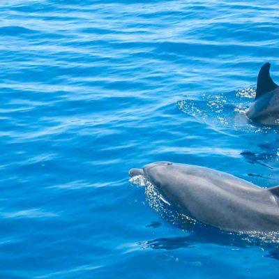 teneriffa, whale watching, walbeobachtung, delfine, delphine, segelyacht, privat-ausflug, privattörn,