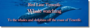 Tenerife Whale watching. To the whales and dolphins off the coast of Tenerife